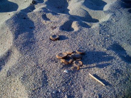 beach-mushrooms.jpg