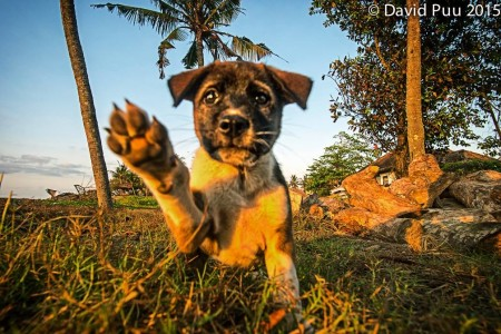 High five welcome back to Bali. Seems like here's always a cute puppy here at the beach.